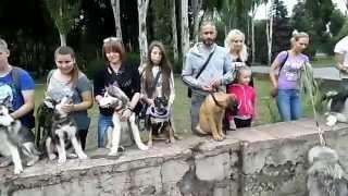 """Выставка собак: субботние """"походеньки"""" собак Кривого Рога до козака Рога"""