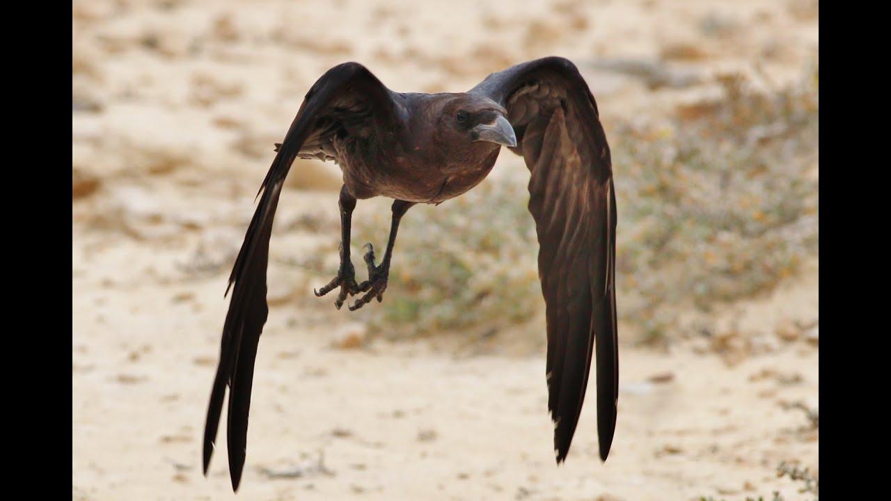 μεγάλο πουλί για την ασιατικήΕίχα πρωκτικό σεξ και im αιμορραγία