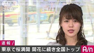 2日午前、東京でソメイヨシノが満開の発表がありました。平年より1日早...