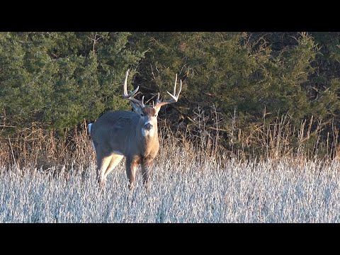 Illinois Deer Hunting: