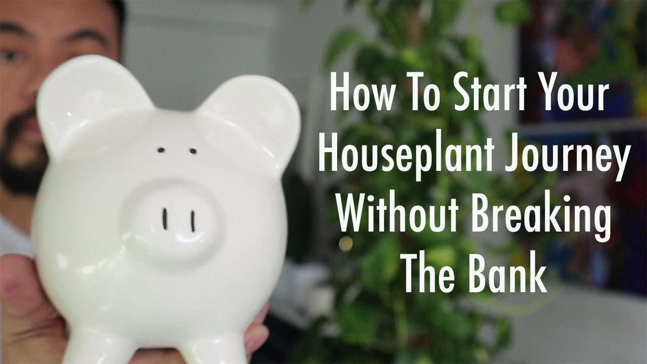 Start and Grow Your Houseplant Collection On A Budget   Beginners Guide To Indoor Plants