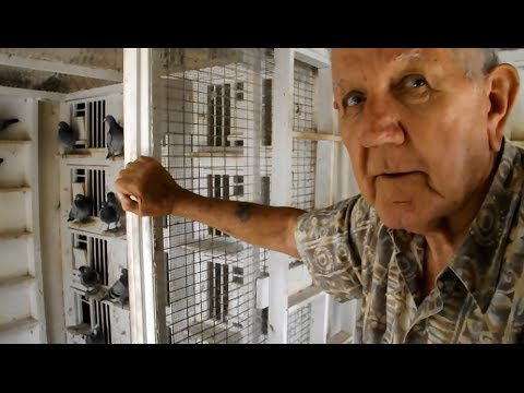 Lifelong Pigeon Fancier  Ross Allenbaugh Serious Pigeon Talk