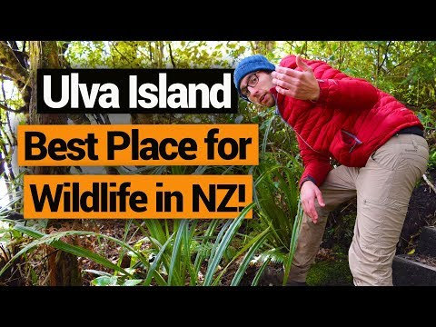 Ulva Island: The Best Place for Wildlife in Stewart Island –  New Zealand's Biggest Gap Year