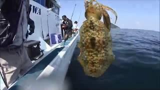 松山沖のアオリイカ船釣り.