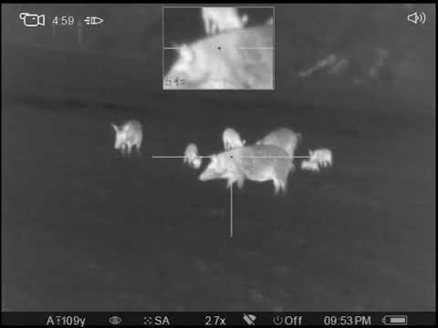 Pulsar Trail XQ50- East texas pig hunt