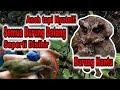 Hanya  Detik Pakai Burung Hantu Pikat Burung Kecil Dan Kolibri Dapat Banyak Sangat Ampuh  Mp3 - Mp4 Download