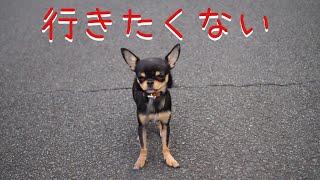 看板犬「黒豆」との生活をお送りしています。 チャンネル登録よろしくお...