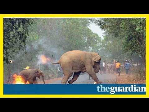 Photo of elephant and calf fleeing fire-throwing mob wins top prize