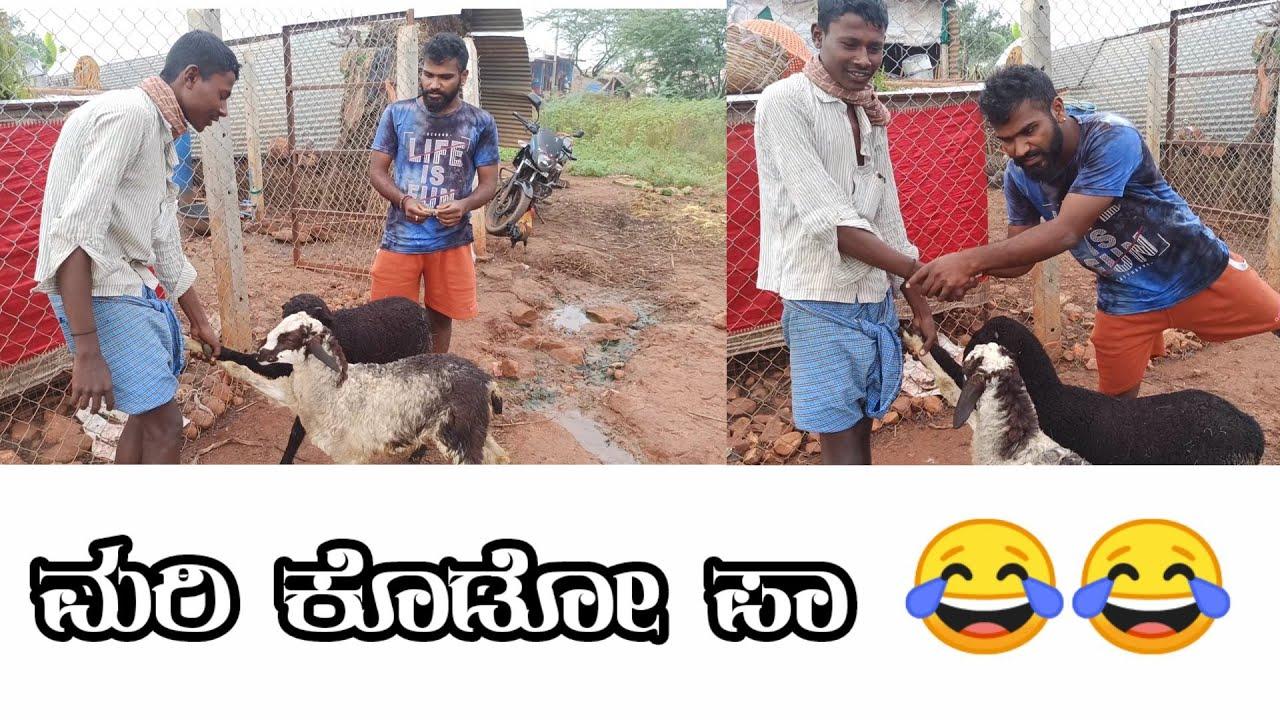 Download ಕುರಿ ಬಜಾರ್ ನಲ್ಲಿ ಹೇಗೆ ವ್ಯಪಾರ ನಡೆಯುತ್ತದೆ ( Kannada Nudi )