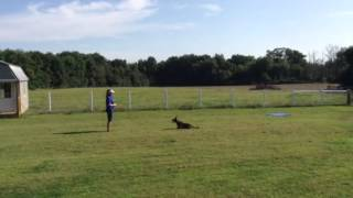 Overland Park Dog Obedience Training