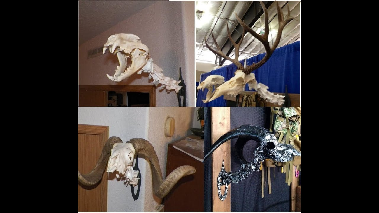 Amazing idea to european mount your deer skull youtube amazing idea to european mount your deer skull solutioingenieria Image collections