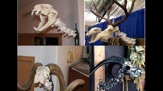 Amazing Idea To European Mount Your Deer Skull