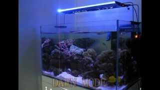 zetlight aquarium led light qmaven zt6100 avi