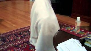 Towel on the Head Experiment: Intelligence of Dogs and Cats