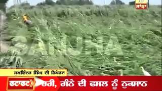 Fatafat News: Heavy rain in Punjab damages crops: Farmers despair