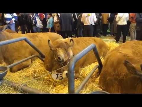 Le Poitou-Charentes au salon de l'agriculture 2015