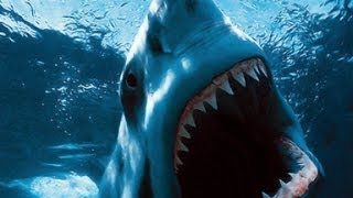 TUBARAO, O PREDADOR DOS MARES.(SHARK, THE PREDATOR OF THE SEAS.)