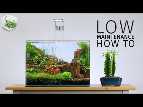 HOW TO: Low Maintenance Nano Aquascape