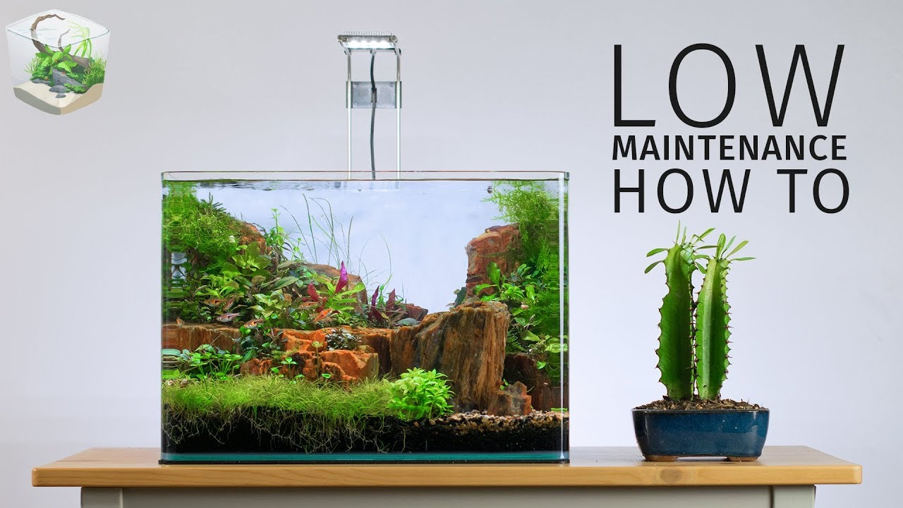 HOW TO: Low Maintenance Nano Aquascape - YouTube