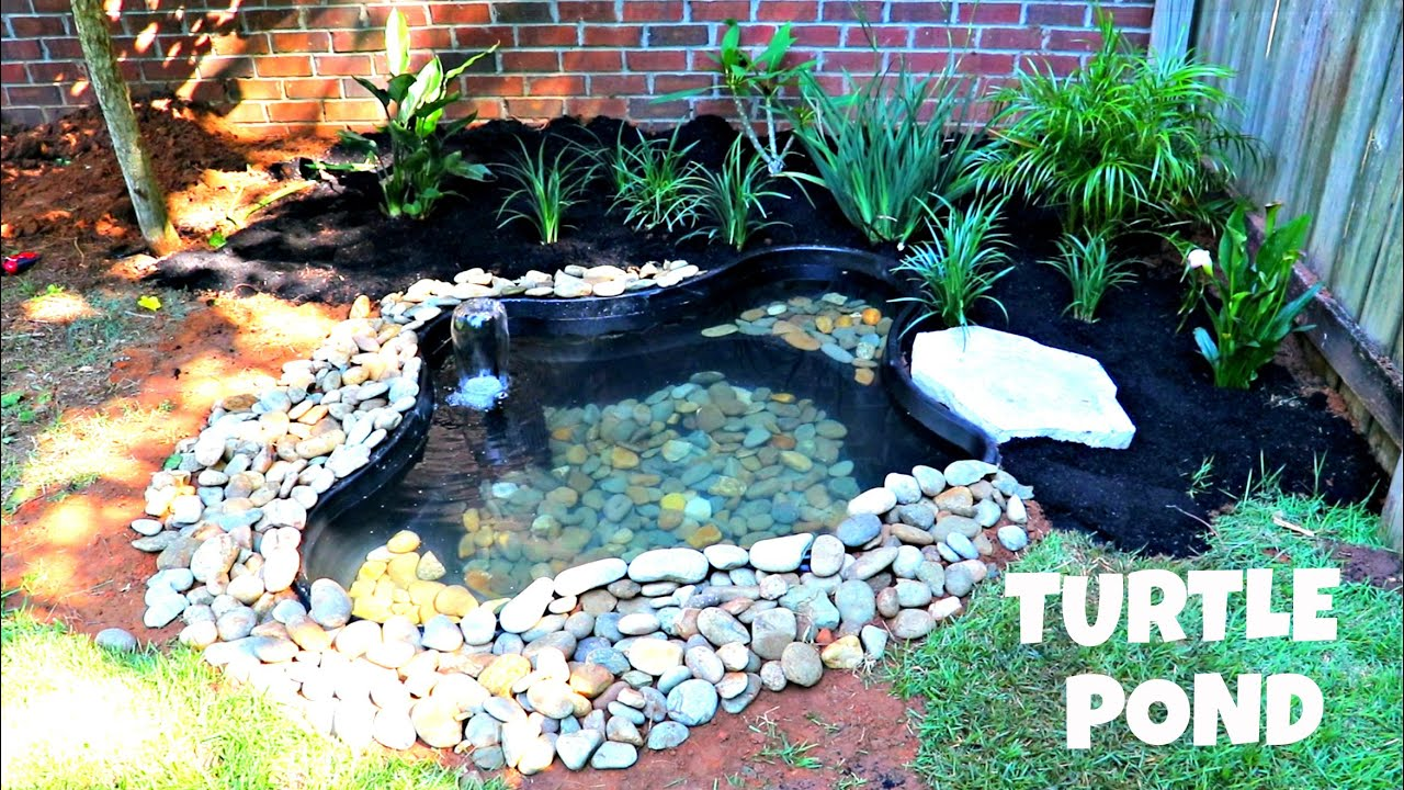 DIY Building a Turtle Pond (Day 1)