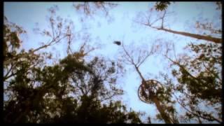 Hollybank Treetops Adventure, near Launceston, Tasmania