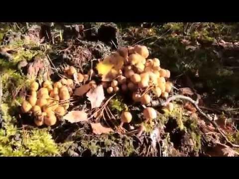 Savaitgalį miškai knibždėjo grybautojų: ką jiems pavyko rasti