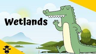 Types of Wetlands | Swamp-Marsh-Bog-Fen |