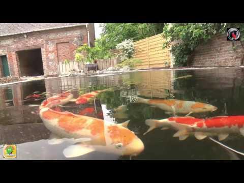 Un bassin a koi Normand