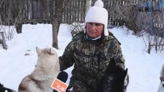 VL.ru - Ездовые собаки в Фроловке