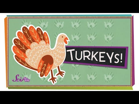 fun-facts-about-turkeys!