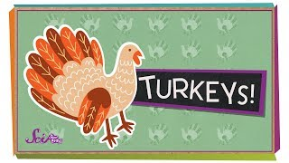 Fun Facts About Turkeys!
