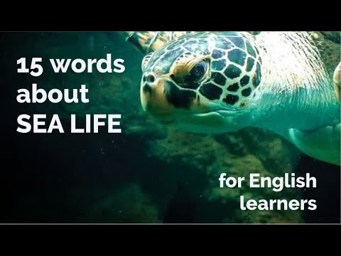 15 Words - About Sea Life