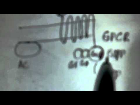 Mechanism of action of G protein coupled receptor