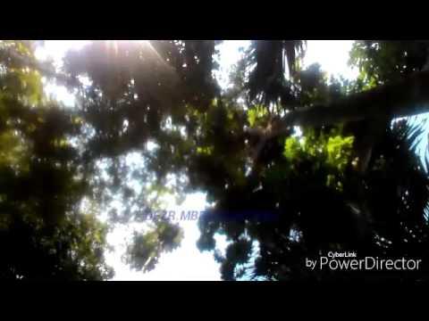 Free Download Setiaku Kau Abaikan(video Official View Laos) Mp3 dan Mp4