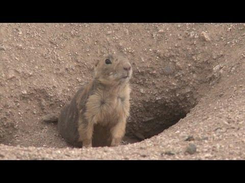 Prairie Dog Hunt