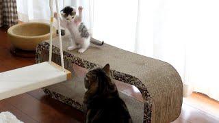ブランコのお手本を見せるねこ。Maru teaches how to get on the swing.