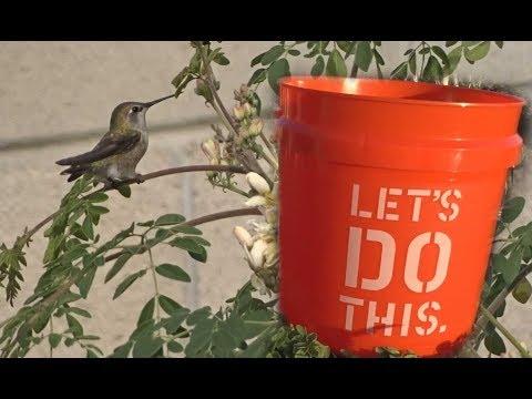 Update in the Garden-Great Offers 'Tis the Season Moringa Eggplant Tomatoes Solar Birdbath