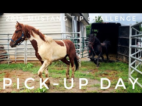 Pick-Up Day   2019 Mustang TIP Challenge