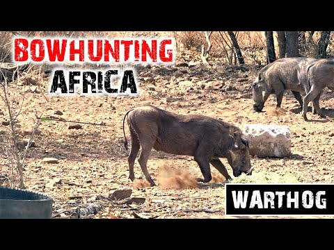 Crossbow Hunting Warthog (First crossbow animal!!)