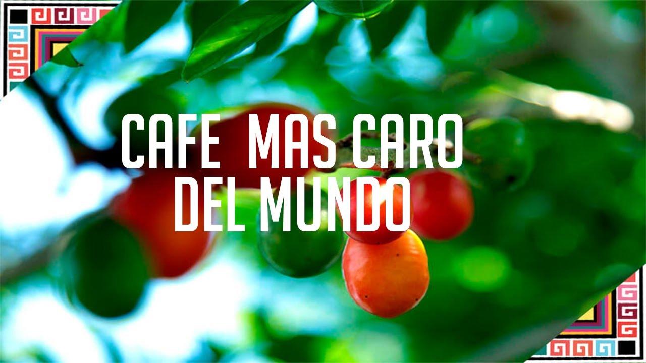 El cafe mas Caro del Mundo, el Geisha y es de Panama.
