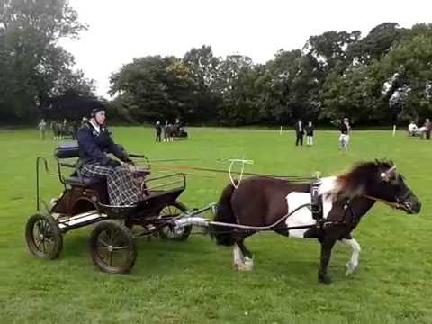 First Carriage Driving   Iverk 2015