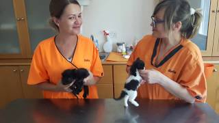 Бездомные котята ищут дом Лимассол Кипр 15 06 2017