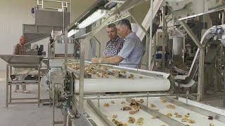 ЕС помогает Молдавии выращивать орехи