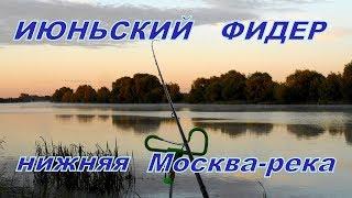 Фидерная рыбалка в июне на нижней Москве-реке.