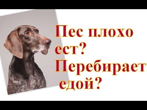 Вопрос: Как повысить аппетит у собак?