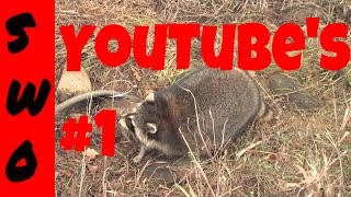 Full length coon trapping video  THE FAST TRACK TO COON TRAPPING