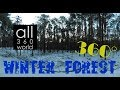 Winter Forest 360 VR