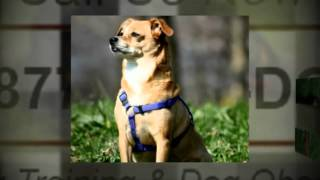 Private Dog Traing San Diego Private Dog Trainers
