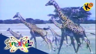 Animals and Their Habitat   Sineskwela