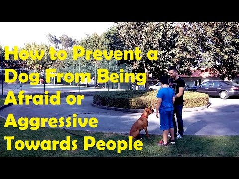 how-to-prevent-a-dog-from-being-afraid-or-aggressive-towards-people